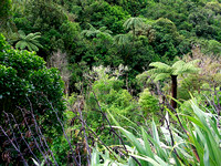 Bush in the Karori Reserve
